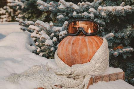 Autumn still life on the snow. A round ripe orange pumpkin lies on a white snow cover. A woolen scarf is wound around the pumpkin. Ski goggles lie on top
