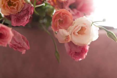 Bouquet of eustoma flowers on a delicate pink background in backlight and gentle haze 写真素材