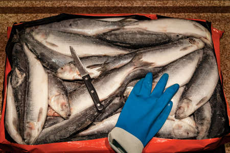 Sea catch. Frozen herring lies evenly. On top is a sharp knife and a blue rubber glove