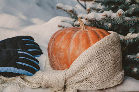Autumn still life on the snow. A round ripe orange pumpkin lies on a white snow cover. A woolen scarf is wound around the pumpkin. Near a pair of warm gloves