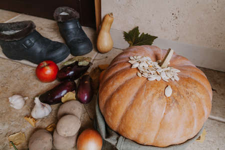Autumn harvest on the doorstep. A large ripe pumpkin in a bag stands on the veranda in front of the front door. Near potatoes, garlic, onion, apple and rubber shoes