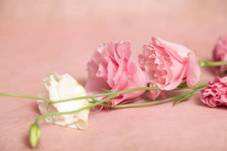 Several eustoma flowers of delicate pink and cream shades in the form of a bouquet lie on a light pink background Imagens