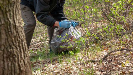 Cleaning nature from garbage. Environmentalist in blue rubber gloves ties a black plastic bag with trash in the forest