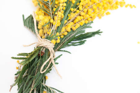 Spring still life. Yellow mimosa branch lies on a white background