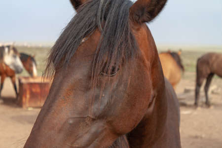 Beautiful red horse close up on a summer day