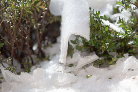 piece of ice of an unusual curved shape lies between green boxwood bushes close-up