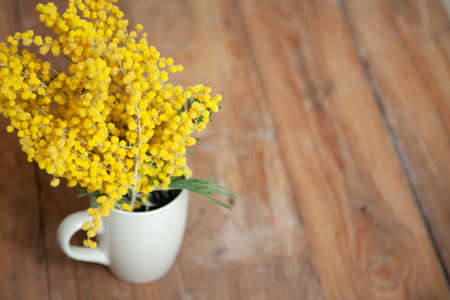 Spring in a cup. The branch of the yellow mimosa stands in a white cup on wooden boards