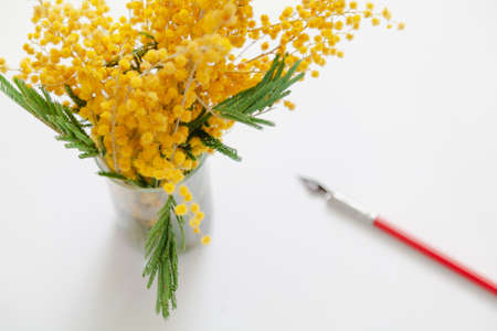 branch of yellow mimosa stands in a glass vase on a white background. Nearby lies a vintage ink pen