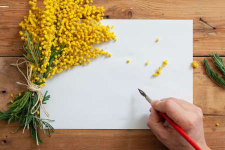 Romantic spring letter. A bouquet of yellow mimosa lies on a sheet of white paper. Hand holding vintage ink pen
