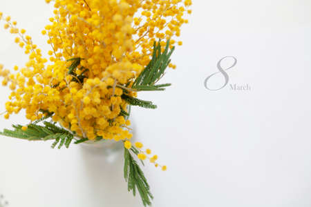 Eighth of March is a women holiday. Branch of yellow mimosa on a white background. Near the inscription March 8 in gray. View from above