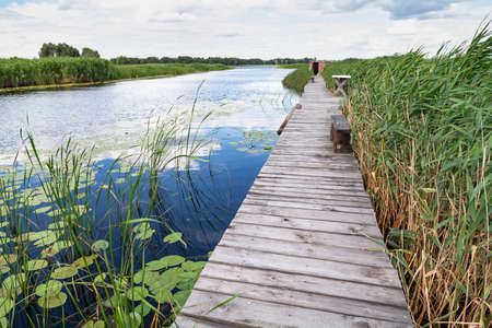narrow wooden platform is installed along the river. On the left is the water surface. To the right are tall thickets of green reeds. Stockfoto
