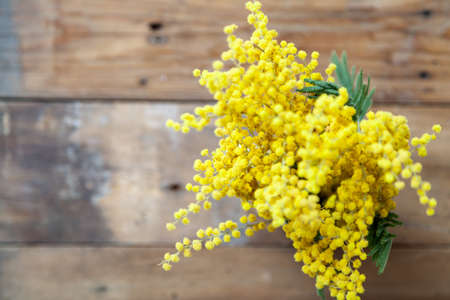 Spring came. Branch of yellow mimosa on a background of wooden boards top view