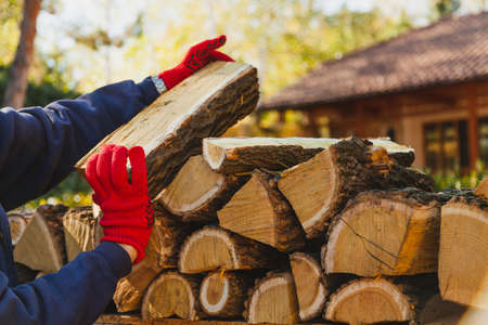 Hands in red work gloves are laying a log of mulberry tree with a yellow core and white stripes in rows. In the background is a house
