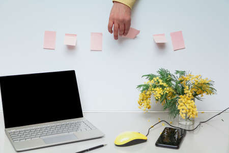 Spring mood in the office. There is an open laptop and a bouquet of yellow mimosa on a gray work table. Between them lies a mobile phone and a yellow computer mouse. Hand peels sticker