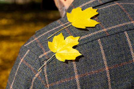 Autumn is on the shoulder. Two beautiful yellow maple leaves lie on a man's shoulder in a fashionable plaid jacket Standard-Bild
