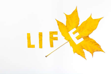 Word Life. The letter E carved on a yellow maple leaf on a white background close-up. The rest of the letters are cut from the sheet