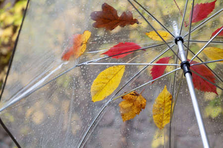 open umbrella made of transparent plastic on which fallen leaves of different trees stuck. Bottom view