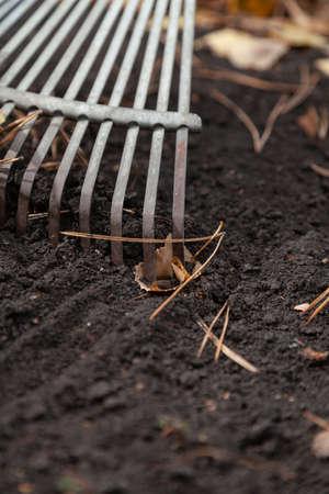 Steel fan rake collect long pine needles and yellow fallen leaves on black earth Standard-Bild