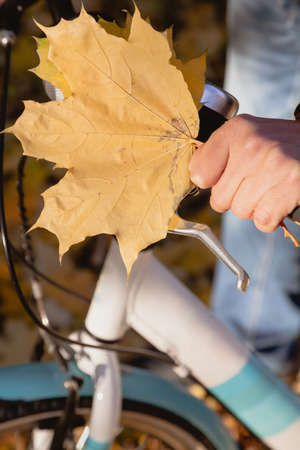 Male hand with a bouquet of yellow maple leaves holds the handlebar of a modern bicycle Standard-Bild