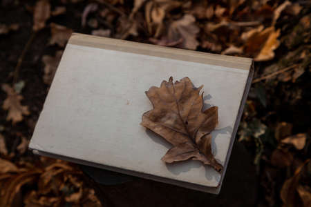 Autumn still life with a book. A brown dry leaf of an oak tree lies on top on a book close-up