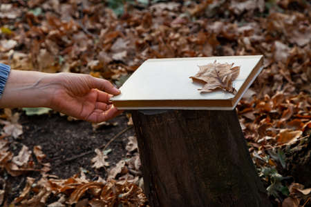Forgotten book in the forest. There is a closed book on a tree stump in the autumn forest. On top is a dry oak leaf. The left female hand reaches out to her