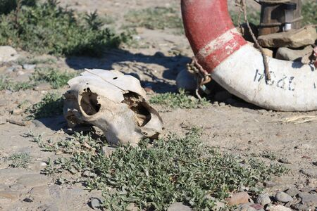 The skull of the animal lies on the ground. Lifeline in the background.