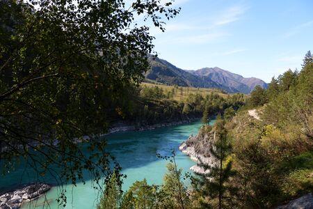 Mountain river turquoise. Coastline. Green tree. Altai. Russia.