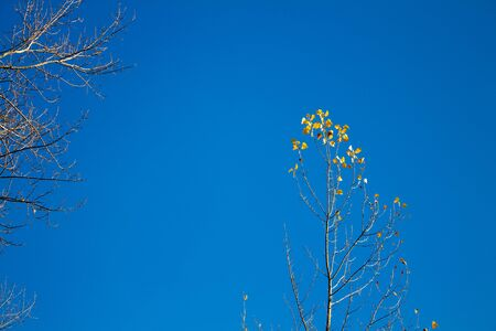 Branches of a tree with yellow leaves against a blue sky. Late autumn Stock fotó - 132615346