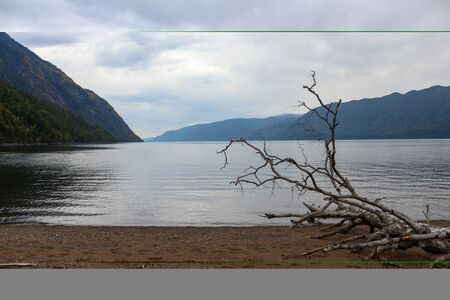Lake between mountains. Sandy beach with old withered tree.