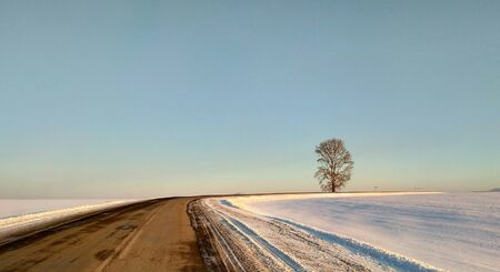 A lone tree stands near a bend in the road. Asphalt, winter. Siberia. Russia.