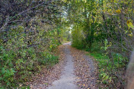 The path along which lies the yellow leaves, through the thicket of the forest. Green foliage, trees, bushes.