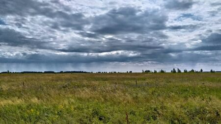 Yellow grass, gloomy overcast sky. Field Stok Fotoğraf - 136182476