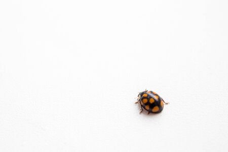 Ladybug isolated on white background. The view from the top. Stock fotó - 135025965