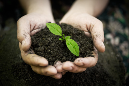 soil conservation: hands holding young plant  Ecology concept