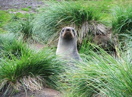 four species: Wildlife of Antarctica Stock Photo