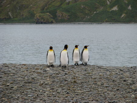 four species: Antarctica landscape  Winter on frozen day
