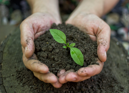 earth day: hands holding young plant  Ecology concept