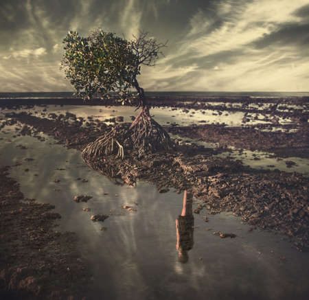 disappear: lonely tree with female reflection in water,photo art Stock Photo