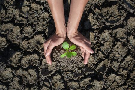germinate: Female hands holding tree growing on cracked earth,environmental problems,love nature,growing tree on crack ground Stock Photo