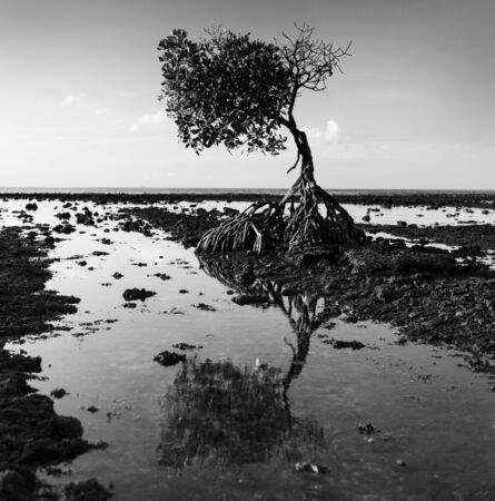 moody sky: albero solitario con la riflessione in acqua