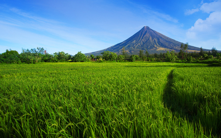 Mayon volcano near green rice fields,Philippines