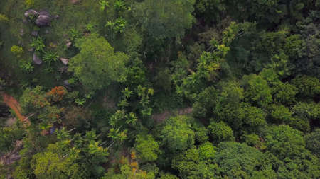 Overhead view above beautiful lush green jungle on a hill area at tropical island in a summer day
