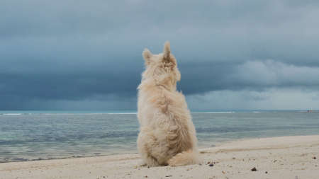 Dog on the sand beach watch at sea scape 版權商用圖片