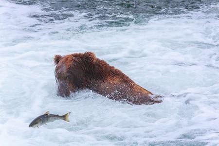 salmon falls: Grizzly bears fishing salmon at Katmai National Park, Alaska