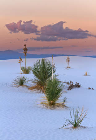 Sunset in the White Sands national Monument, New Mexico, USA