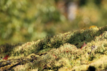 green moss background texture beautiful in nature Stock Photo