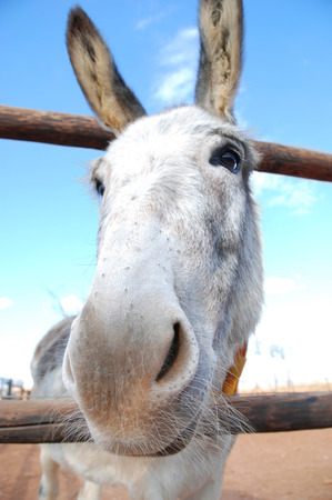 Friendly donkey photo