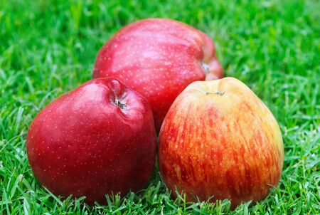 Close up of colorful apples on the grass Stock fotó