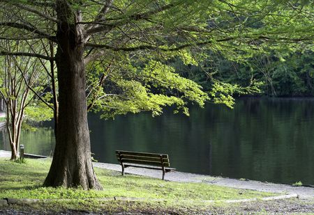 a bench under a tree at waters edge Stock Photo