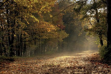 a picture of sunlight falling on a fall trail